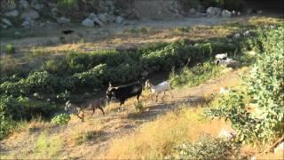 Paseo Los Encinos en Tecate, Baja California