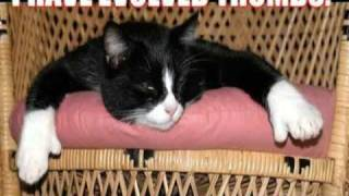 Very Funny Cats 85