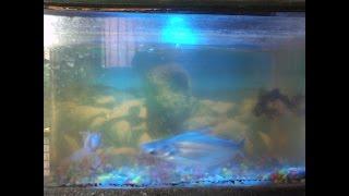 Comment Faire Un Aquarium éclairage LED à la maison (alimentation CA)
