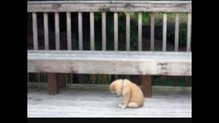 Очень-очень грустное видео про животных