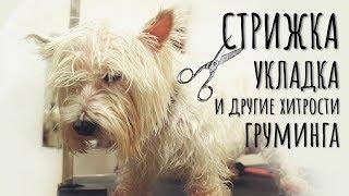 Стрижка собаки | DogTalk