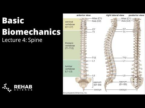 Biomechanics Lecture 4