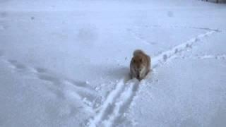 ラッセルに疲れたかい(北海道犬は、ガクちゃん(黒ラブ)の足跡を辿っ...