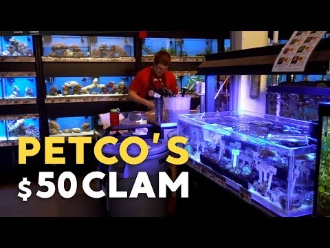 Buying a $50 Clam at PetCo.
