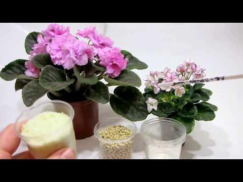 Как ПРАВИЛЬНО удобрять ФИАЛКИ и др. комнатные растения. Основные правила