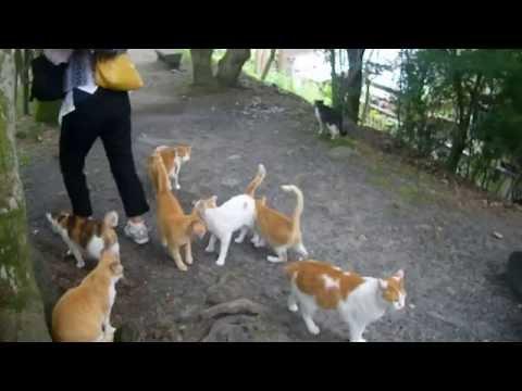 Vidéo chats à Kyoto