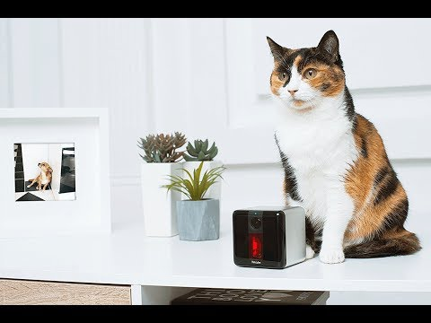 Best Cat Gear on Amazon 2017 | New Cat Inventions | Must Have Cat Products