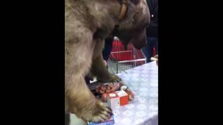 Настоящий медведь в супермаркете!!! (часть 2)