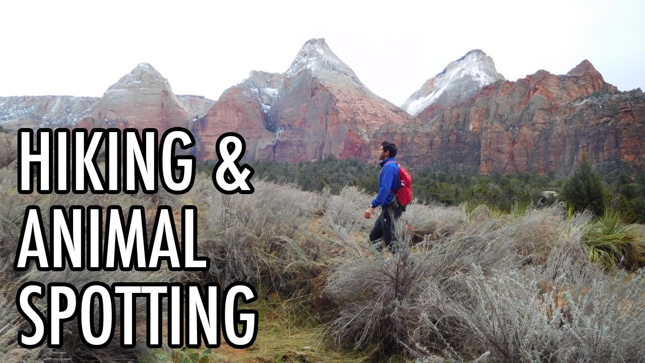 Wild Animal Spotting & World-Class Hiking in Zion National Park