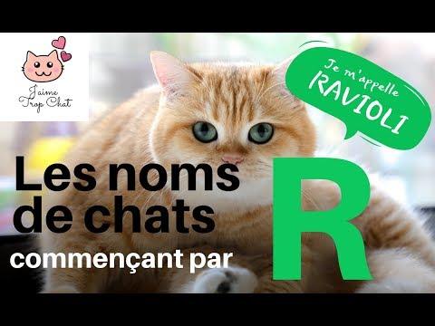 🐱Les Noms De Chats En R! 🐱Quel Nom Choisir Pour Votre Chat?