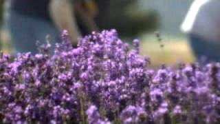 Young Living Lavender Farms Lavender Days 2006