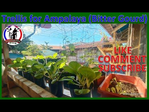 How To Make Trellis For Ampalaya?