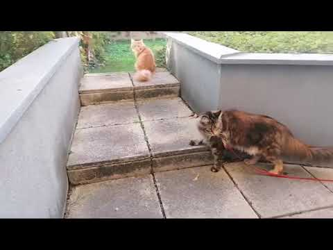 Baby Cats - Cute and Funny Cat Videos Compilation | Cat Orinoco