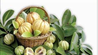 Гарциния Камбоджийская как средство для похудения.