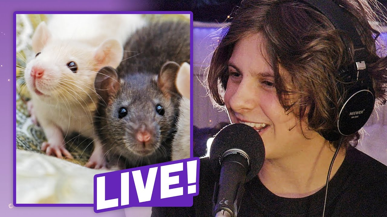The Selfish Rat Experiment (with NoahFinnce)   Sci Guys Live! (Clip #5)