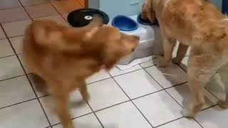 Funny dog and old dog
