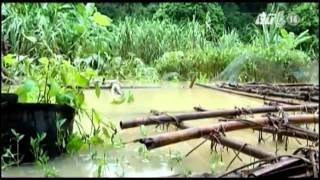 VTC14_Cuộc sống khốn khó của người dân vùng lũ Quảng Ninh
