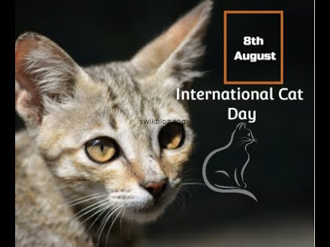 International Cat Day 2020 Unknown Facts About The Beautiful Species Of Cats Youtube