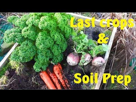 Allotment Diary : Veg Plot Soil Preparation, Polytunnel & Last Veg Harvest