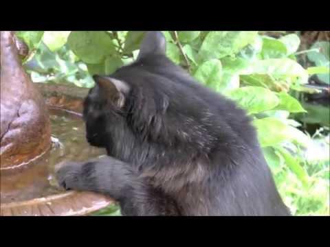 My Movie - Northweald Lane Wildlife, Kingston Upon Thames
