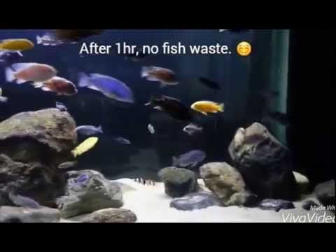 CLEANING FISH WASTE WITH NO SYPHON NO BUCKET