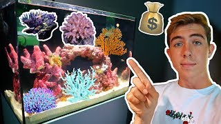 crazy-3000-saltwater-setup-gets-new-colorful-coral