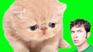 Repeat youtube video TALKING CAT!!