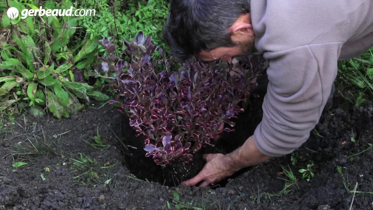 Arbuste Persistant Pour Pot arbustes en pot, fleuris du printemps à l'automne