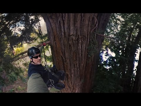 Virtually Climb a Giant California Redwood in This 360° Video