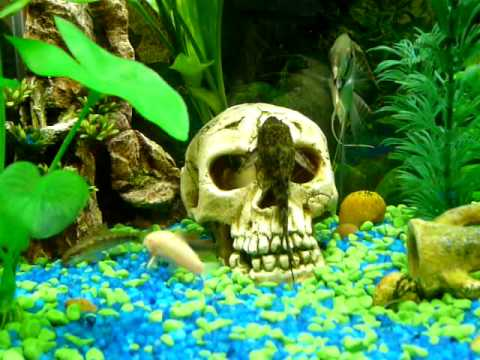 Peces Tropicales Youtube