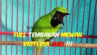 Download Mp3 Pancingan Cucak Ijo Full Tembakan Mewah Kriteria Juri !!!