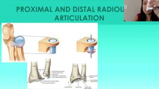 6. The Forearm: Ulna and Radius - Proximal and Distal Radioulnar Joints