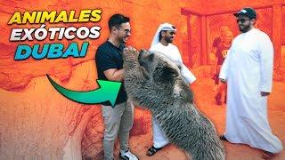 LAS MASCOTAS EXOTICAS DE LOS MILLONARIOS DE DUBAI