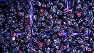How To Prepare Blackberry Jam Cake | P. Allen Smith Cooking Classics