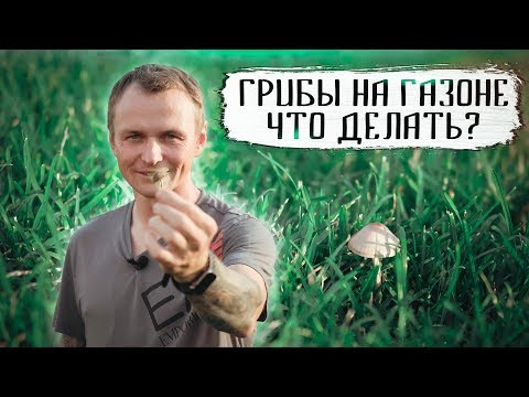 Грибы на газоне, что делать? Как избавится от грибов на газоне!
