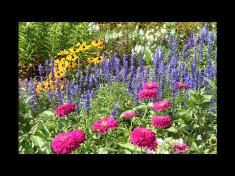 Design ideas for Small perennial garden