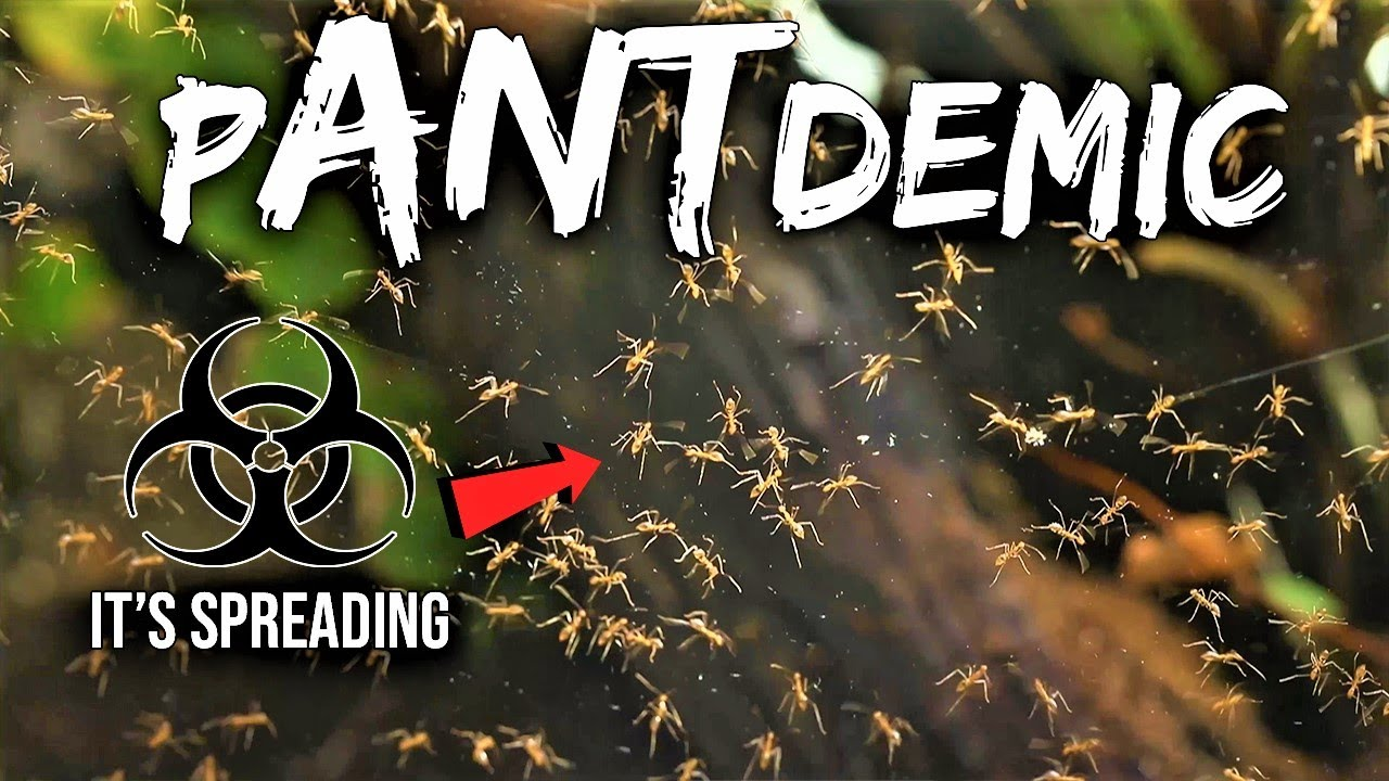 A Deadly OUTBREAK Is Spreading Within My Ant Colony - download from YouTube for free