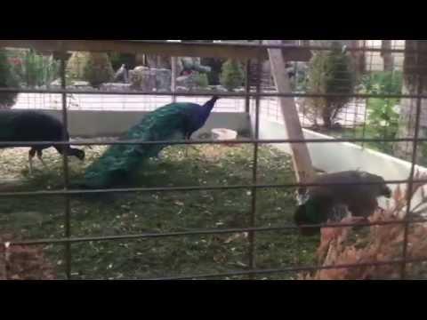 База отдыха «Лесная Сказка» - Птицы