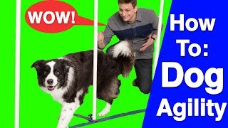 An Introduction to Dog Agility!