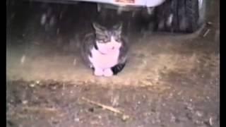 1987年に「加トちゃんケンちゃんごきげんテレビ」の「おもしろビデオコ...