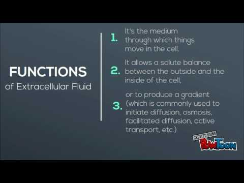 Fluid Compartment - Extracellular Fluids