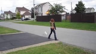 Dog Obedience Ottawa