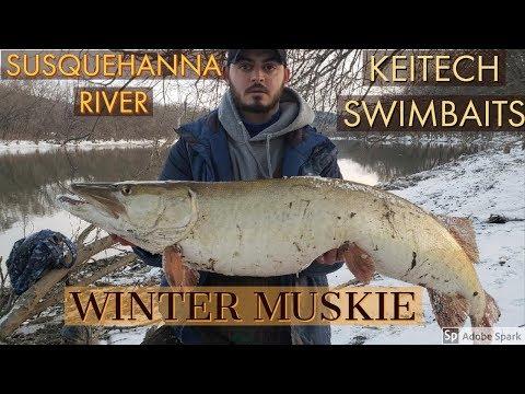 Catching Winter Muskie On The Susquehanna River Using Swimbaits