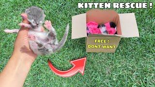 RESCUED! NEWBORN KITTEN LEFT IN BOX