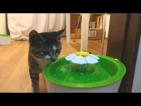 Hagen Catit Flower Fountain, Kitten drink water.(하겐 캣잇 플라워 분수)