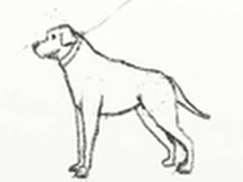 Como dibujar un perro paso a paso fcilmente  YouTube