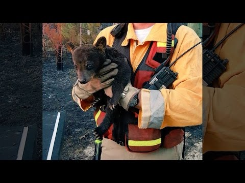 Firefighters Name Bear Cub 'Smokey Jr.' After Rescuing Him from Wildlife