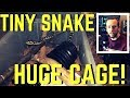 - Can Small Snakes Thrive in Large Cages? - The Animals at Home Podcast