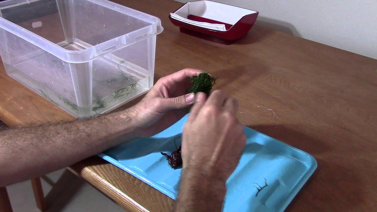 Hacer un rbol acu tico making an acuatic tree funnydog tv for Como hacer un criadero de peces