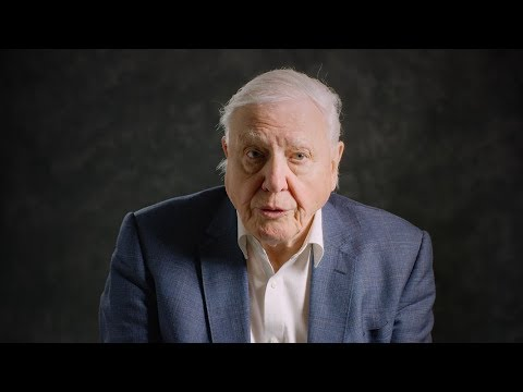 David Attenborough Explains What We Need To Do To Stop Over-Fishing